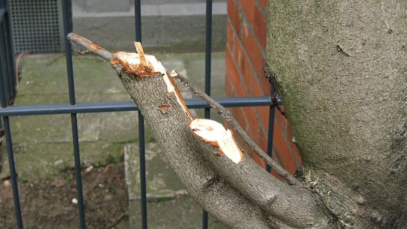 Rabiater Baumschnitt